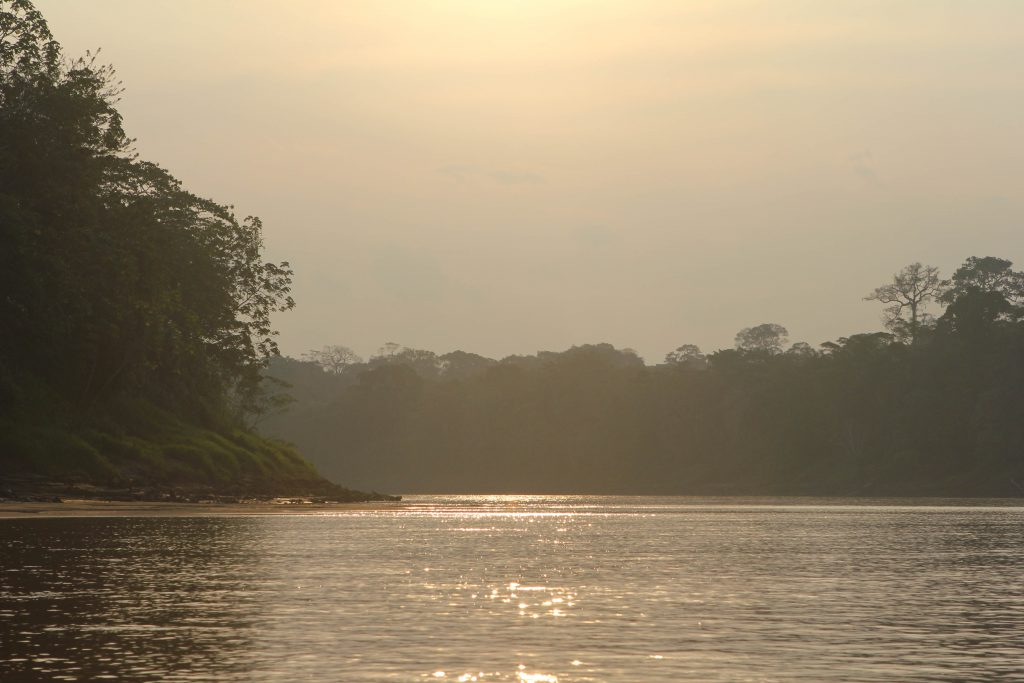 Amazon Jungle. Photo by Brandy Little.