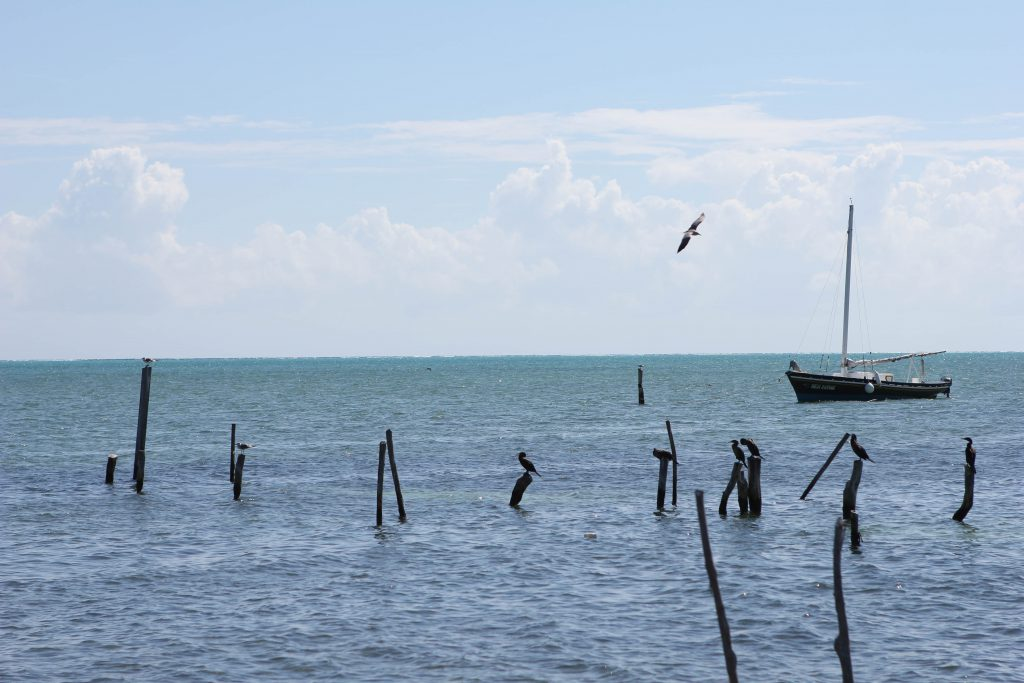 Ocean view from Caye Caulker. Photo by Brandy Little.