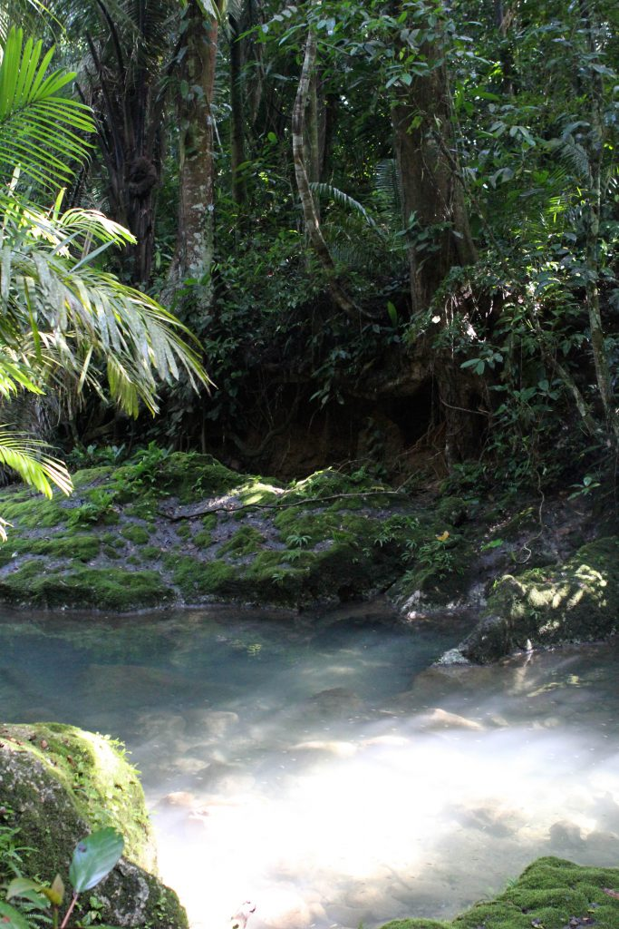 Belize rain forest. Photo by Brandy Little.
