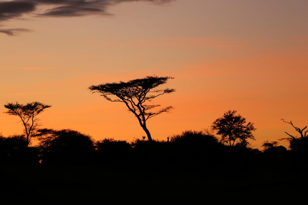 Serengeti Sunset, photo by Brandy Little
