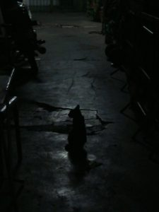 Cat in a dark alley in Bangkok photo by Brandy Little