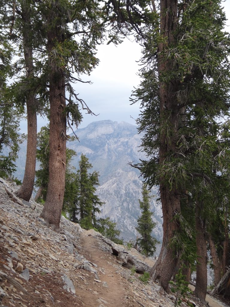 Hiking Solo in Mount Charleston photo by Brandy Little