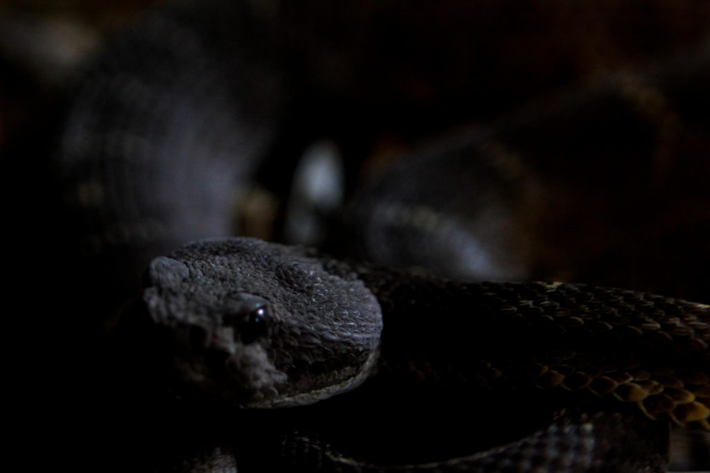 Snakes at the American International Rattlesnake Museum photo by Brandy Little